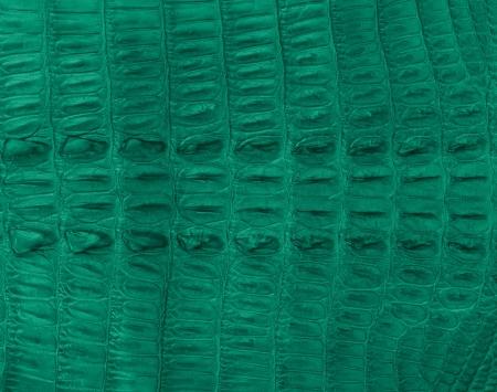 Crocodile bone skin texture background  photo