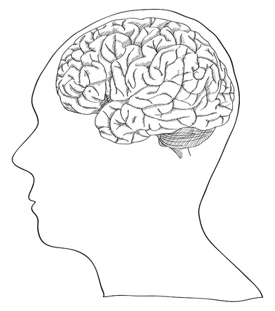 Vector of Human Brain Sketched Up, Vector Illustration  Vector