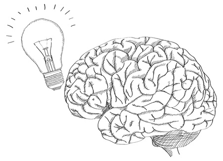 Human Brain with Light Bulb for Think Idea Concept Vector Outline Sketched Up, Vector Illustration