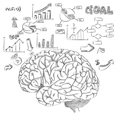 Menselijke hersenen met Infographic Diagram voor Business en Technology Concept Vector Outline Geschetst Up, Vector Illustratie