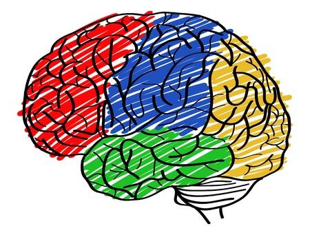 Human Brain Vector Outline Sketched Up, Vector Illustration  Иллюстрация