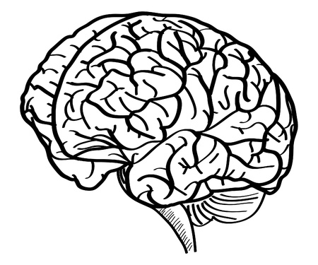 Human Brain Vector Outline Sketched Up, Vector Illustration  Vector