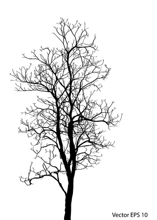 without: Dead Tree without Leaves Vector Illustration Sketched