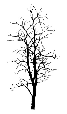tree silhouettes: Dead Tree without Leaves Vector Illustration Sketched