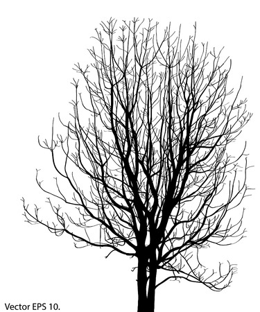 Dead Tree without Leaves Illustration Sketched Vector