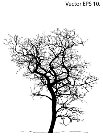 bare tree: Dead Tree without Leaves Vector Illustration Sketched, EPS 10
