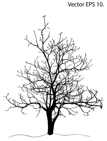 Dead Tree without Leaves Vector Illustration Sketched, EPS 10 Stock Vector - 23975419