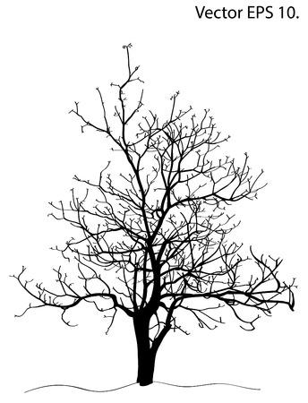 toter baum: Toter Baum ohne Blätter Vektor-Illustration skizziert, EPS-10
