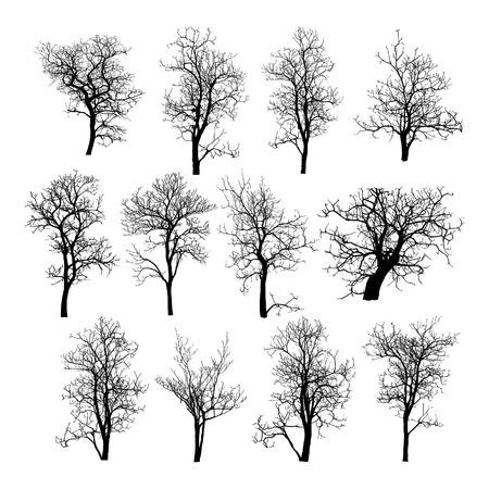 hojas de arbol: Árbol Muerto y sin hojas Ilustración vectorial bosquejada, EPS 10
