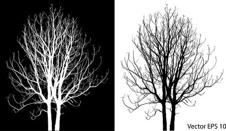 Dead Tree sans feuilles Vector Illustration esquissé, EPS 10 Banque d'images - 29302985