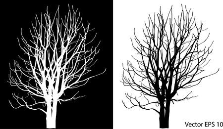 Dode boom zonder bladeren Vector Illustratie Geschetst Stockfoto - 29302988