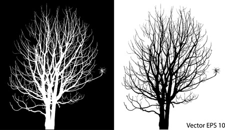 Dead Tree sans feuilles Vector Illustration Esquissé Banque d'images - 29302990