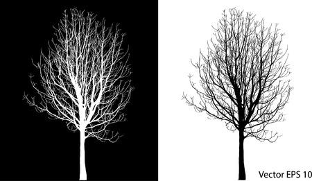 arbre mort: Dead Tree sans feuilles Vector Illustration Esquiss� Illustration