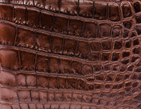 crocodylus: Freshwater crocodile belly skin texture background. This image of Freshwater Crocodile Crocodylus siamensis.This skin is very classic and beauty. Stock Photo