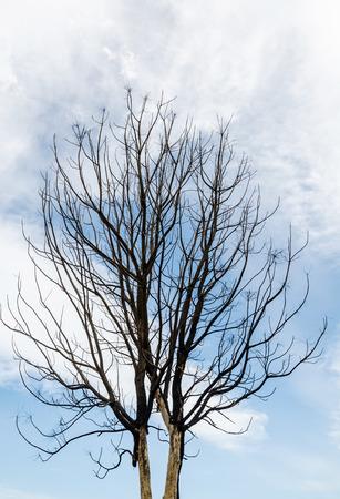 toter baum: Silhouette toter Baum ohne Bl�tter mit dem blauen Himmel. Lizenzfreie Bilder