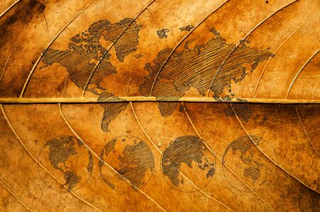 gold textured background: World map carving on wood plank.