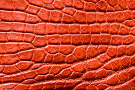 Freshwater crocodile belly skin texture background. This image of Freshwater Crocodile
