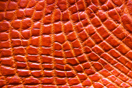 Freshwater crocodile belly skin texture background. This image of Freshwater Crocodile Crocodylus siamensis.This skin is very classic and beauty. Stock Photo