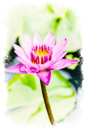 Watercolour Painting of Purple lotus in the park.