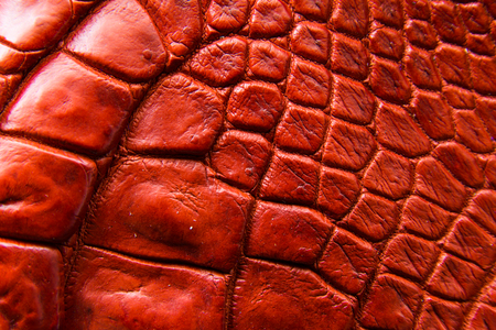 Freshwater crocodile belly skin texture background. This image of Freshwater Crocodile Crocodylus siamensis.This skin is very classic and beauty. 版權商用圖片