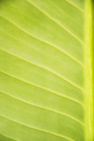 Green leaf texture background.