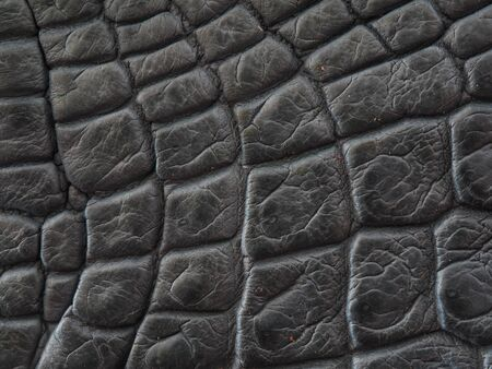 Freshwater crocodile belly skin texture background.This image of Freshwater Crocodile Crocodylus siamensis.This skin is very classic and beauty.