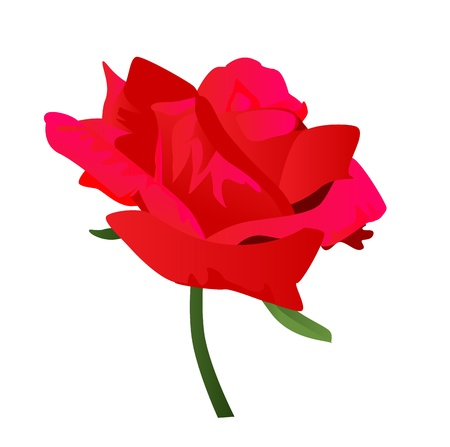 Red rose The rose for someone special  Stock Vector - 14205837