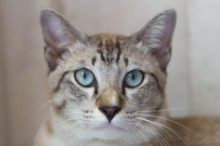 close up: Close up cat face