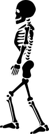 Isolated black silhouette of standing human skeleton. Illustration