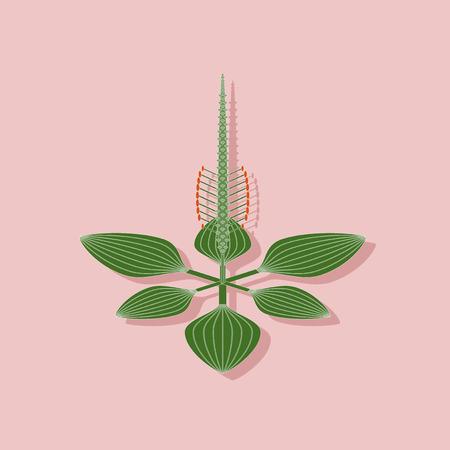 paper sticker on stylish background of plant Plantago