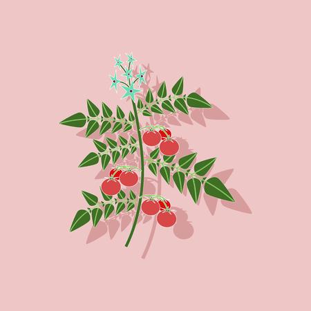 tomato plant: paper sticker on stylish background of tomato plant