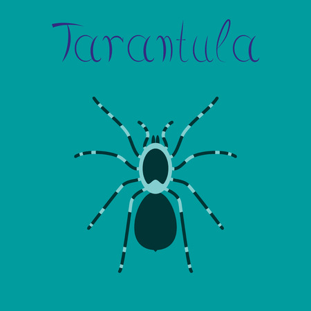 flat illustration on stylish background spider tarantula Illustration