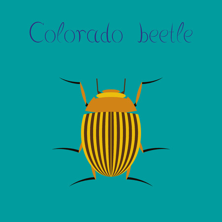 flat illustration on stylish background Colorado beetle