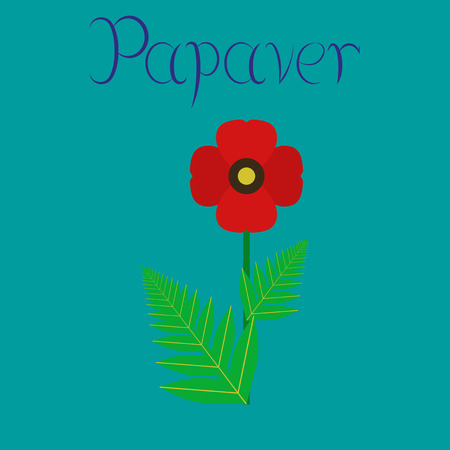 papaver: flat illustration on stylish background flower papaver