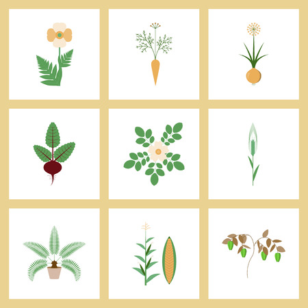 zea mays: assembly of flat Illustrations papaver daucus carota allium beta rosa majalis phoenix zea mays pepper Illustration