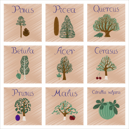 widespread: assembly flat shading style Illustrations of Pinus Picea Quercus Betula Citrullus Malus Prunus Cerasus Citrullus Populus Illustration