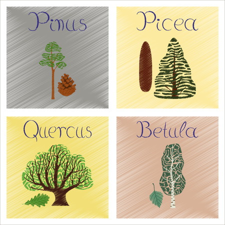 widespread: assembly flat shading style Illustrations of Pinus Picea Quercus Betula