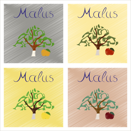 tannins: assembly flat shading style Illustrations of plant Malus