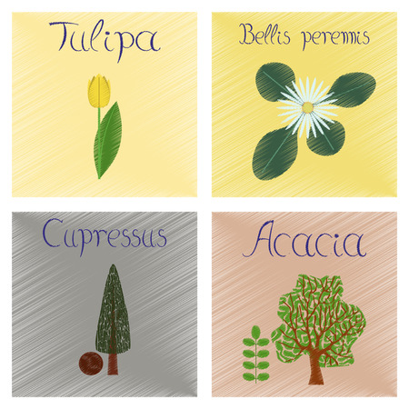 assembly flat shading style Illustrations of Cupressus Acacia Bellis Tulipa