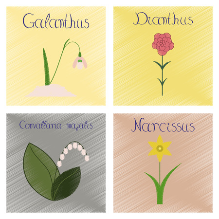 narcissus: assembly flat shading style Illustrations of Convallaria Narcissus Dianthus Galanthus
