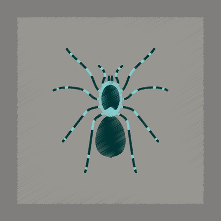 flat shading style illustration of spider tarantula