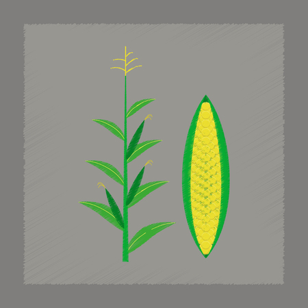 zea mays: flat shading style illustration of zea mays Illustration