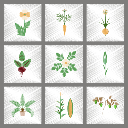 zea mays: assembly flat shading style illustration of papaver daucus carota allium beta rosa majalis phoenix zea mays pepper Illustration