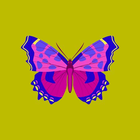 chitin: Colorful flat icon of butterfly isolated on green