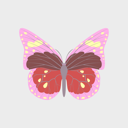 Colorful flat icon of butterfly isolated on white Illustration