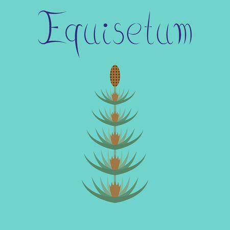 flat illustration on background wild flower Equisetum