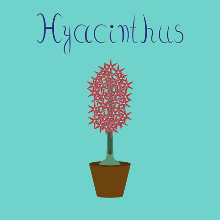 cultivating: flat illustration on stylish background Hyacinthus