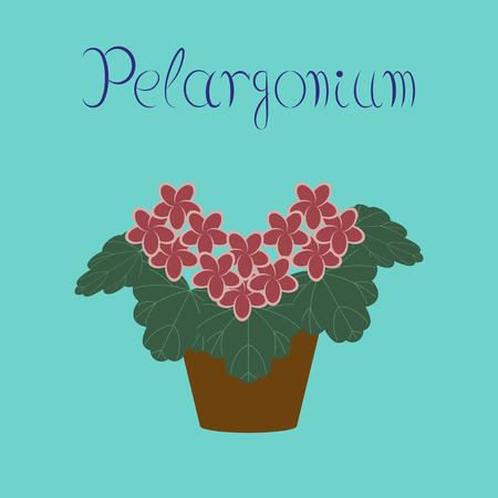 petal: flat illustration stylish background plant Pelargonium
