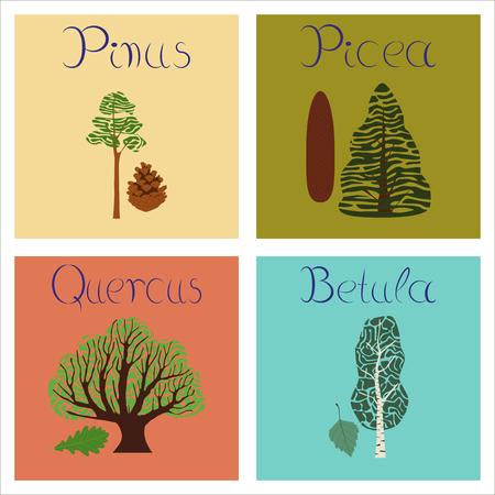 quercus: assembly of flat Illustrations Pinus Picea Quercus Betula Illustration