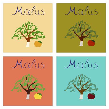 tannins: assembly of flat Illustrations plant Malus Illustration